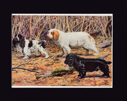COCKER,CLUMBER AND FIELD SPANIELS
