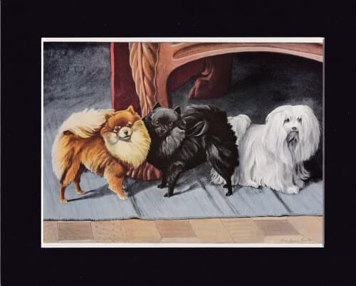 POMERANIANS-AND-MALTESE-TERRIER