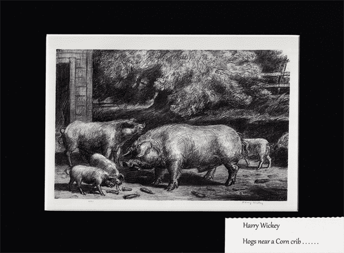 Hogs Near a Corncrib BY HARRY WICKEY