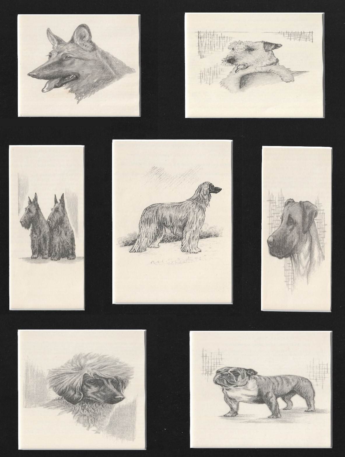 C.Francis Wardle - Pups and Pubs Dog Prints